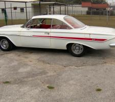 Striped Impala